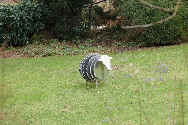 Einsames Schaf im Nagoldtal